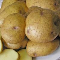 Картофель Синеглазка